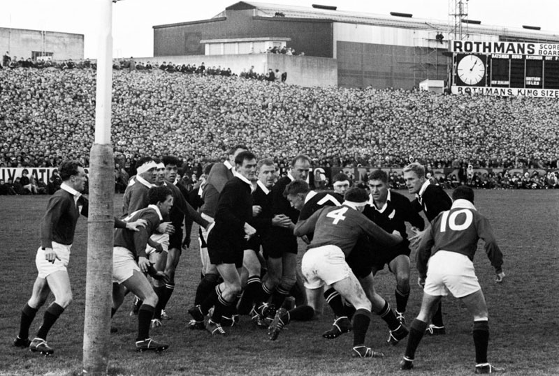 Lions in 1966